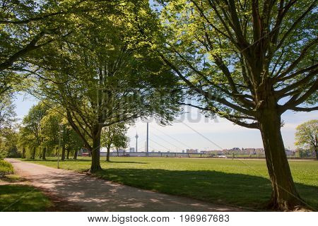 A walk in the park at the rhine waterfront of Dusseldorf