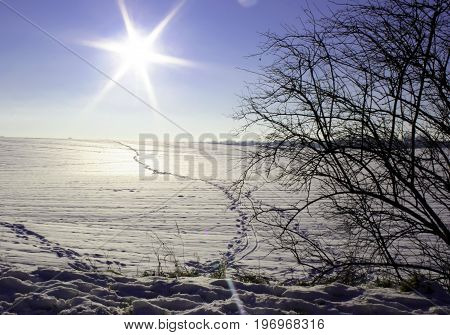 winter wonderland in late january with a snowy landscape
