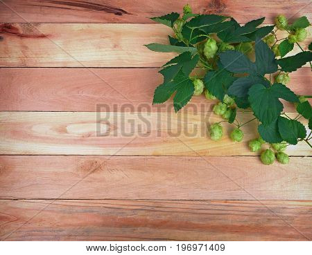 Beer brewing ingredients Beer brewery concept. Hop cones and leaves closeup. Fresh cones of hops on a wooden background. top view.
