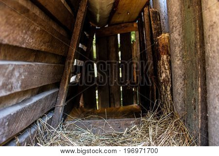 In to a chicken shed interior rural