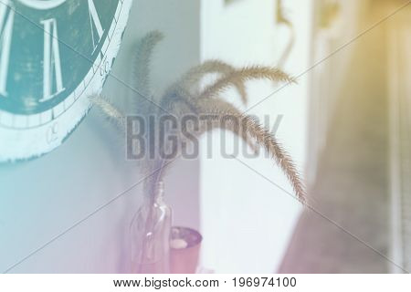 Flowering Grass (feather Pennisetum) In Glass Bottle Decorate At Passageway