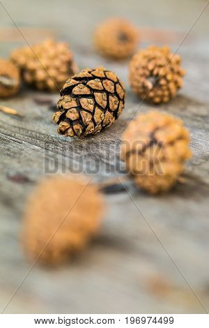 A Focused Pine Cone Resting On A Wooden Table