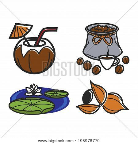 Vector illustration of coconut, coffee beans, water lily and nuts isoalted on white.