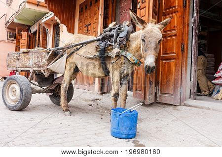 Mule cart in front of traditional buildings in the medina of Marrakech.