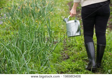 Closeup of woman's hands holding metal watering can and watering plants in the garden. Growing organic onions. Gardener working outdoors.