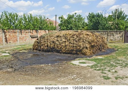 Heap of cow dung ready to use natural fertilizer.