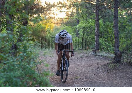 cyclocross biker ride alone in forest road, sunrise and pines background