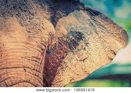 Close up image of an elephants face