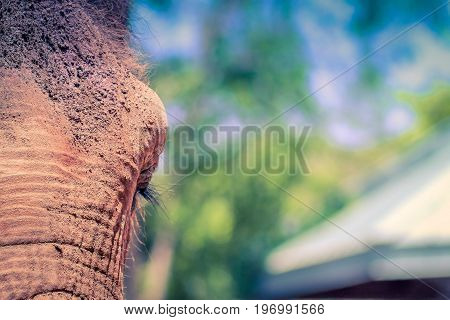 Close up image of an elephants face with copy space