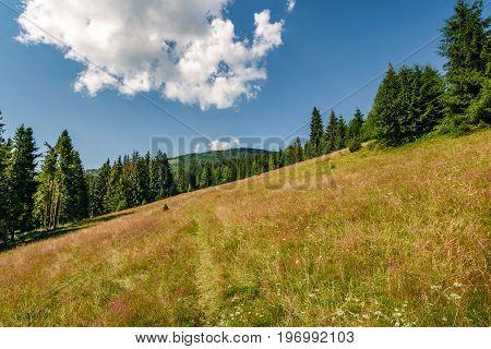 Conifer Forest In Classic Carpathian Mountain Landscape