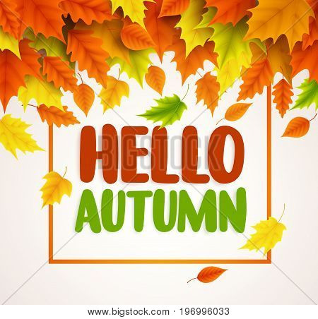 Hello autumn vector banner design. Text greetings for fall season with collections of yellow and orange maple leaves falling in white background. Vector illustration.