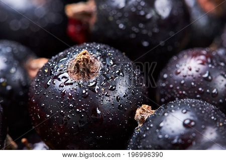 Black Currant With Water Drops.top View.fresh Berries.macro Photographycloseup.macro Photography.sel