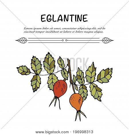 Handdrawn vector doodle logo. Autumn illustration with eglantine berries.
