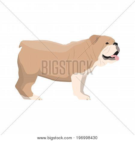 Vector illustration of Bulldog standing on white background.