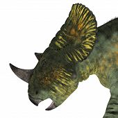 Brachyceratops Dinosaur Head 3d illustration - Brachyceratops is a herbivorous Ceratopsian dinosaur that lived in Alberta Canada and Montana USA in the Cretaceous Period. poster