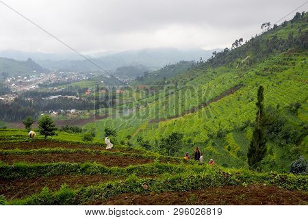 Kigali, Rwanda -13 November 2018 : Terraced Landscape In Central Africa, Hills Of Rwanda