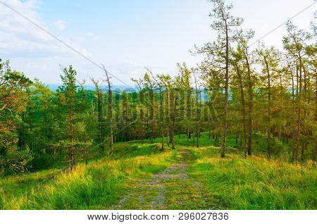 Forest landscape with trees growing on the mountain slopes under soft sunset light, forest mountain nature - view from height