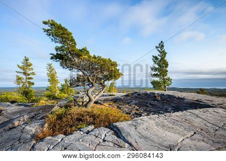 Evening View Of A Bending Tree Struggling For Life On A Windy Mountain Top
