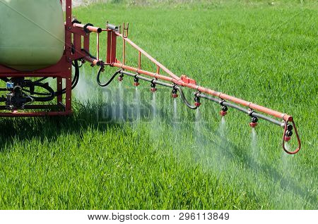 Tractor Spraying Herbicide Over Wheat Field With Sprayer. Agriculture, Farming, Gmo, Pollution, Cont