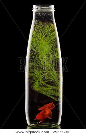 bottle with red fish on black background