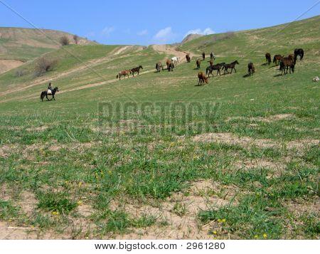 Herde von Pferde