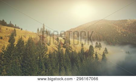 Sunny Autumn Mountainous Landscape Aerial View. Fir Forest Hill Slope Surface Wild Nature Scenery. Thick Fog Ravine Wooden Hut Mountain Meadow Natural Environment Concept Drone Flight