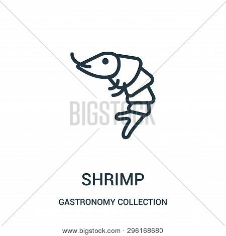 Shrimp Icon Isolated On White Background From Gastronomy Collection. Shrimp Icon Trendy And Modern S