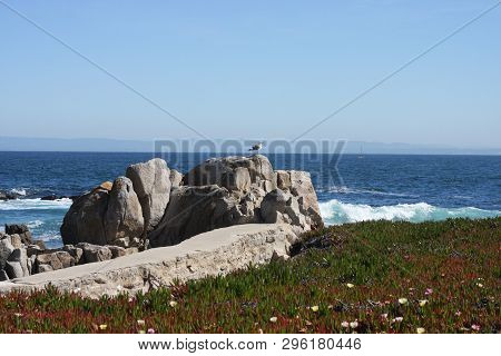 This Is An Image Of Rocks And Ice Plant Taken Along The Shoreline Of Pacific Grove, California Durin