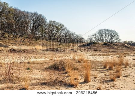 Dutch National Park Loonse En Drunense Duinen Early In The  Morning In The Beginning Of The Spring S