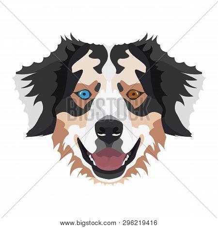 Illustration Australian Shepherd