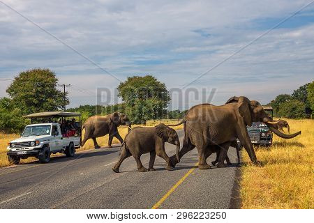 Kasane, Botswana - April 8, 2019 : Herd Of Elephants Crossing The Street In Front Of Safari Cars Wit