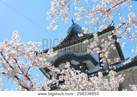 Kanazawa Old Castle Cherry Blossom Tree Japan