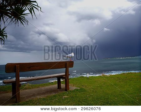 A bird is siting and locking at the incoming storm poster