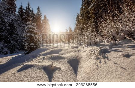 Winter Landscape With Spruce Forest In The Mountains. Winter Scene. Snowcovered Pine Trees In The Wi