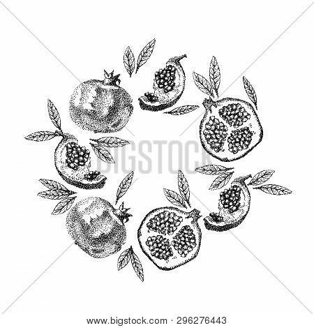 Pomegranate Fruit Vintage Design Template. Botanical Fruit. Engraved Pomegranate. Hand Drawn Pomegra