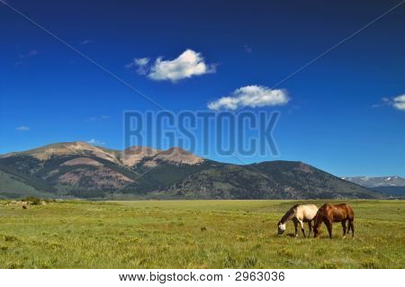 Horses Grazing In Field With Mountains In Colorado