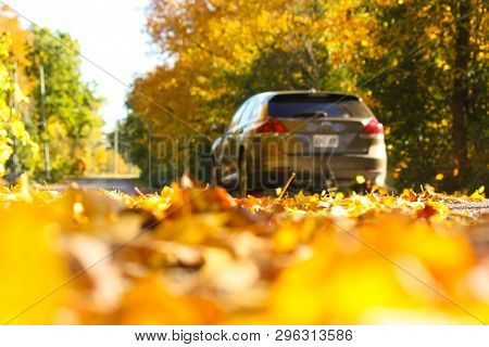 Sunny Autumn Country Drive Through The Blowing Leaves,traveling Down A Winding Rural Road And Disapp