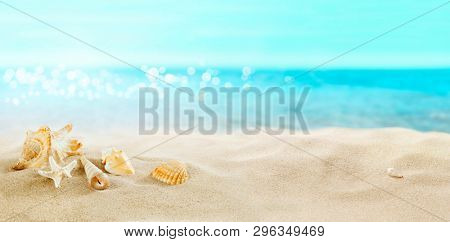 View of the sandy beach. Shells in the sand.
