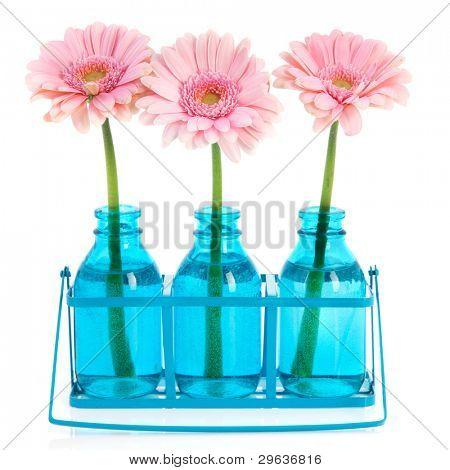 Pink Gerber in blue vases in metal rack