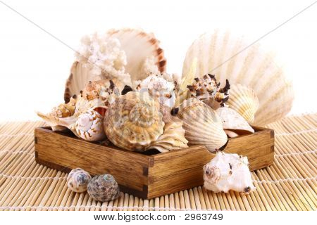 Spa Summer Seashell isolated on white background poster