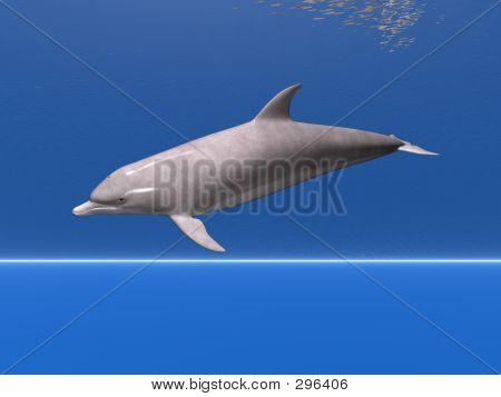 underwater dolphin poster