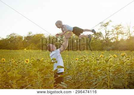 Father Throws Up His Little Son On Sunny Sunflowers Field.