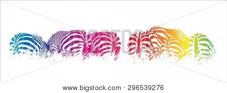 The back view of a row of zebras in rainbow colours. Popular social media banner proportions