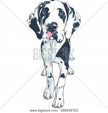 Vector Spotted Dog Harlequin Great Dane Puppy