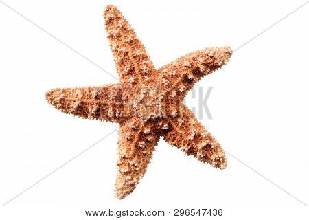 Small Star Fish Seastar Isolated On White Background