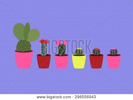 Home Plants Cactus In Pots And With Flowers. A Variety Of Decorative Cactus With Prickles Isoleted O