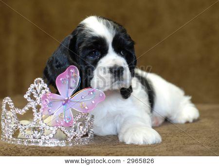 Acs Princess Black N White