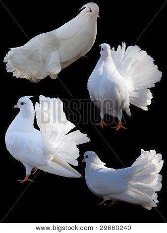 Set Of Four Doves.