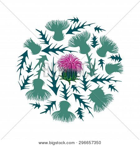 Vector Round Bunch Of Silhouette Thistle Or Carduus Plant, Spiny Leaf, Bud And Flower In Pastel Gree