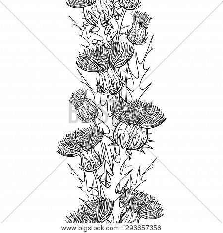 Vector Seamless Pattern With Outline Thistle Or Carduus Plant, Spiny Leaf, Bud And Flower In Black O